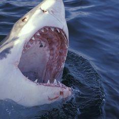 Интересное: Акулы любят мужиков