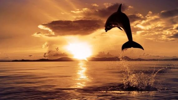 Интересное: Дельфины