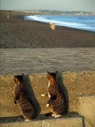 Юмор: Морские котики