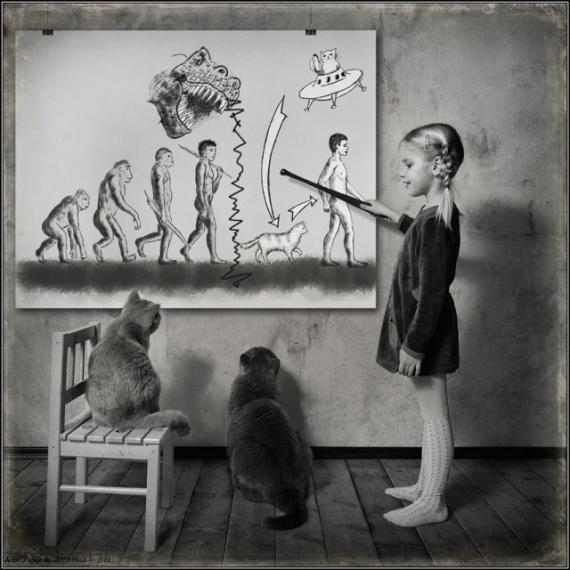 Юмор: Эволюция человека: кошачья версия
