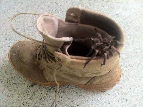 Интересное: Проверяйте обувь!