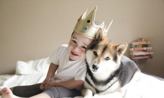 Животные: Заведите собаку!