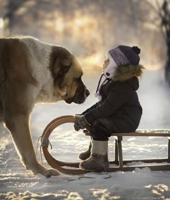 Животные: Милота