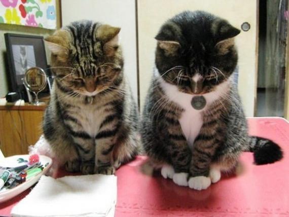 Животные: Мифы о кошках