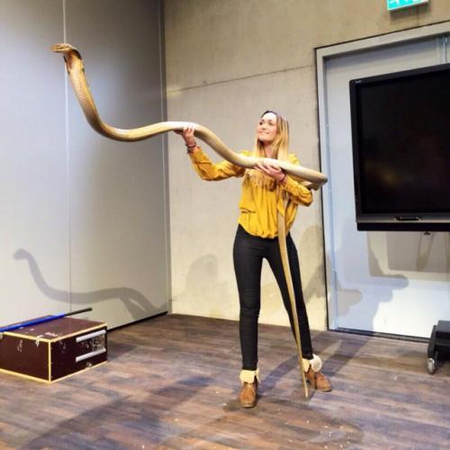 Животные: Девушка и кобра