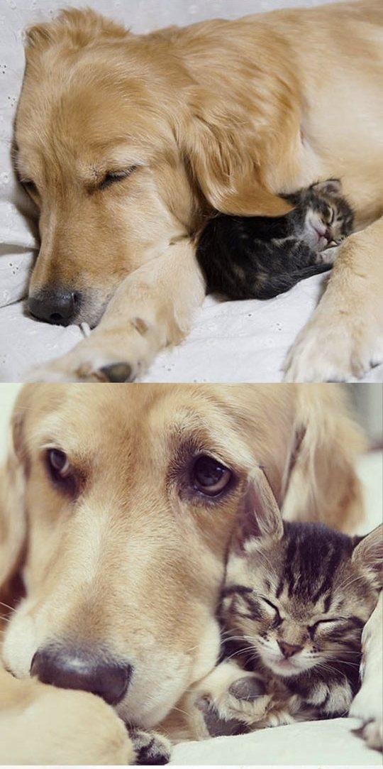 Животные: Собаки - лучшие люди