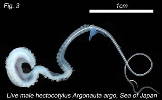 Животные: Хитрый осьминог