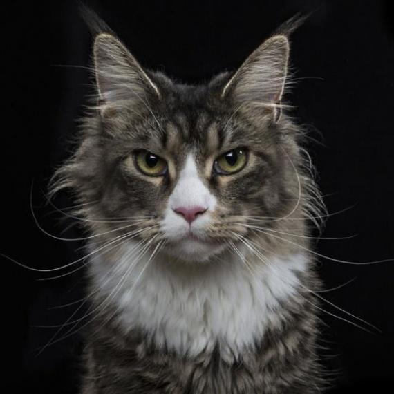 Животные: Фото на паспорт