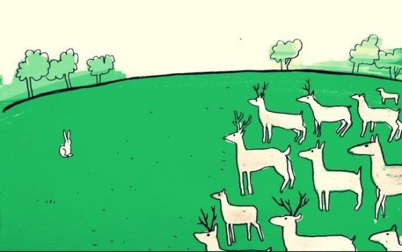 Животные: Факты о животных