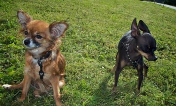 Животные: Наши собаки