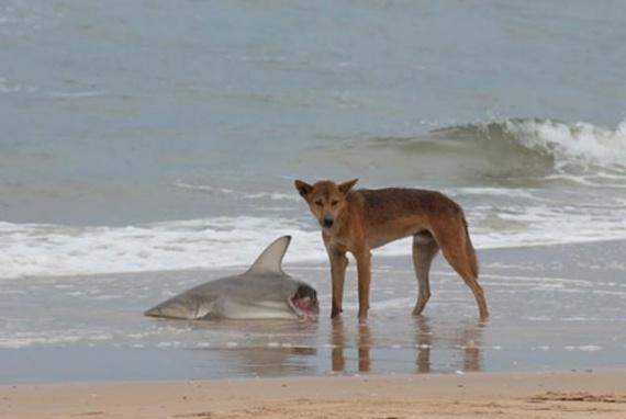 Животные: Хотите в Австралию?