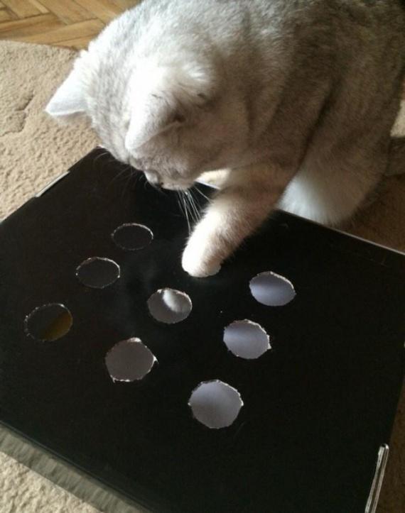 Полезные советы: Игрушка для котэ