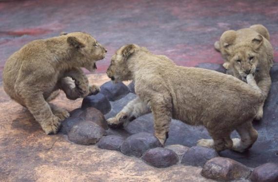 Животные: Братья наши меньшие