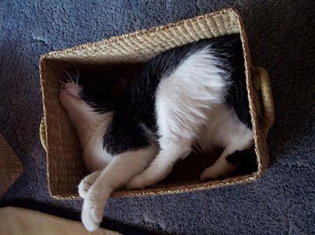 Животные: Любовь к коробкам