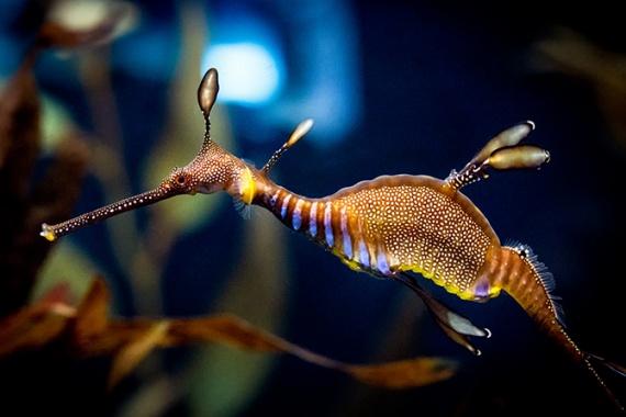Животные: Интересные рыбки