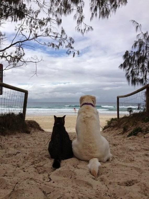 Животные: Это любовь:-)