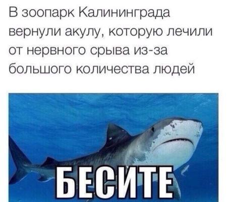 Животные: Довели акулу