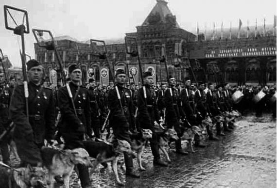 Животные: Псы войны