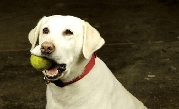 Животные: Собачьи советы