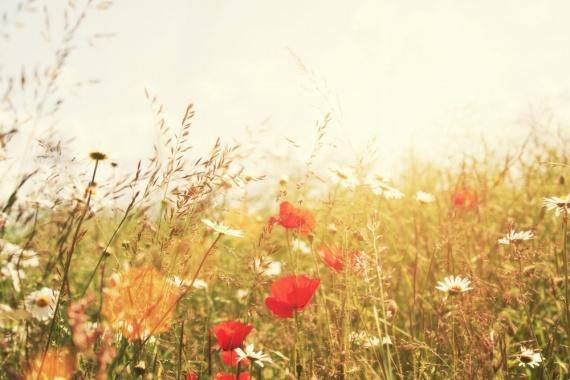 Природа: Скорей бы лето!