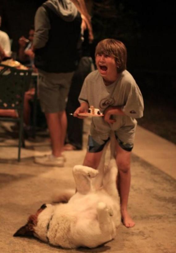 Животные: Собачуры:-)