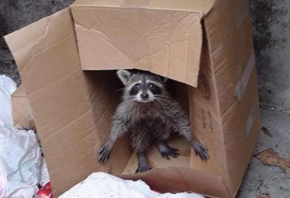 Животные: Я не кот, я - ЕНОТ!