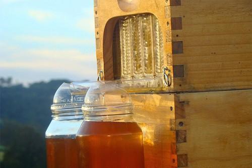Полезные советы: Пчелы не против