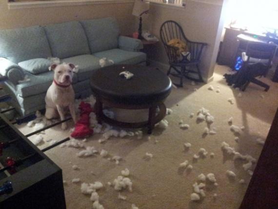 Животные: Мы просто играли