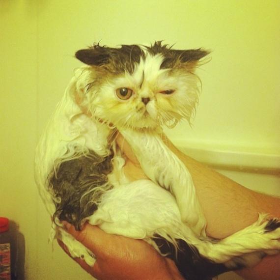 Животные: День кошек