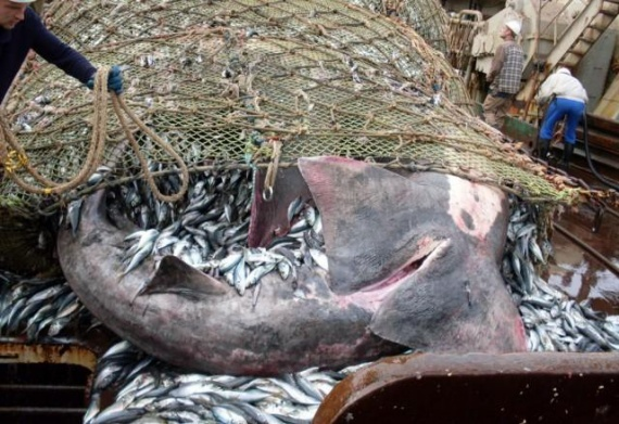 Проишествия: Поймали рыбку