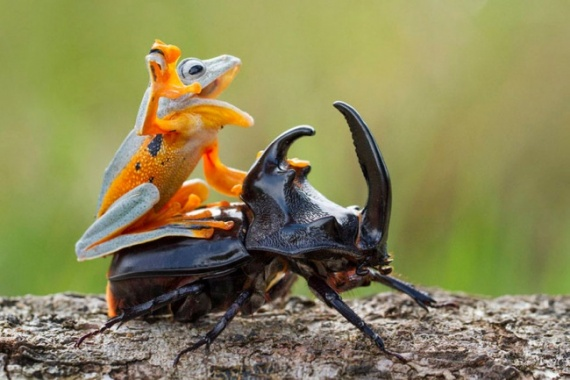 Животные: Мимими