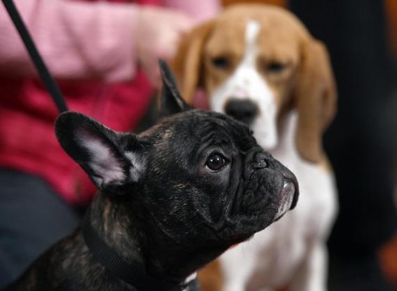Животные: Популярные собаки
