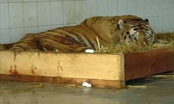 Животные: Депрессия...