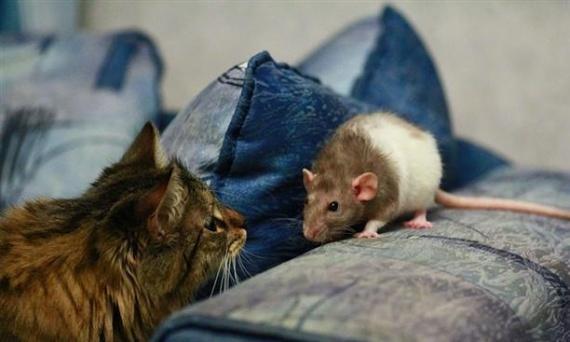 Животные: Лариска, в сумку - РАЗ!