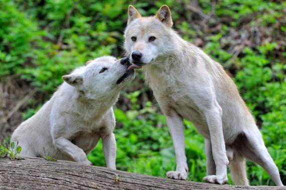 Животные: Животная любовь