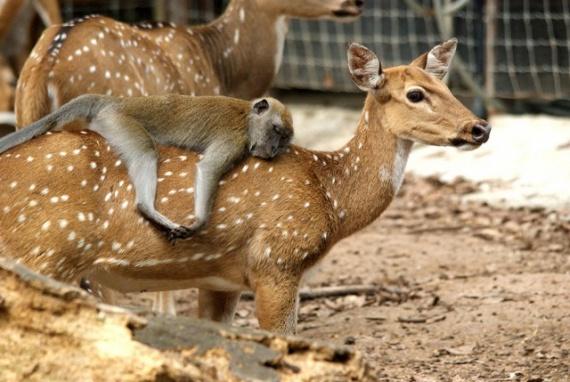 Животные: Эх, прокачу!