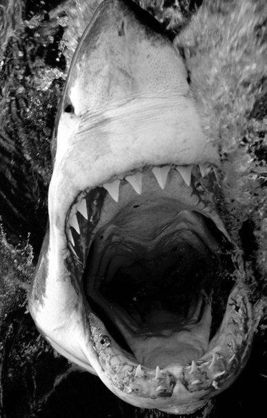 Животные: Милая рыбка:-)