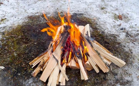 Полезные советы: Выживание в лесу