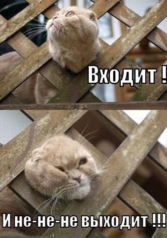 Животные: Застряли:-)