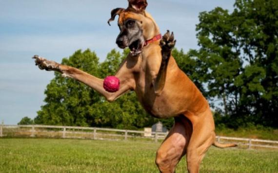 Животные: Большие собаки. Мифы