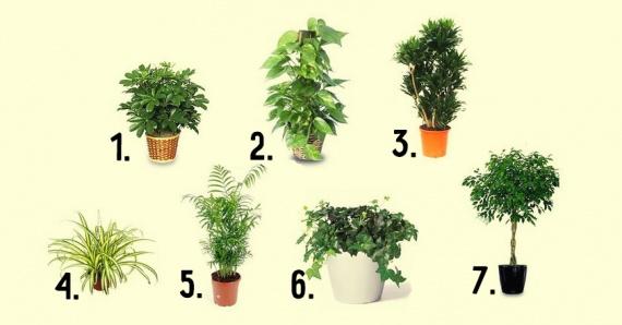 Полезные советы: Полезные растения