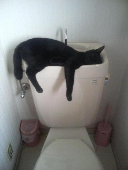 Животные: Спят усталые...