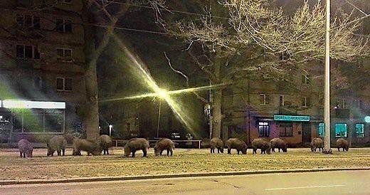Животные: На Латвию напали