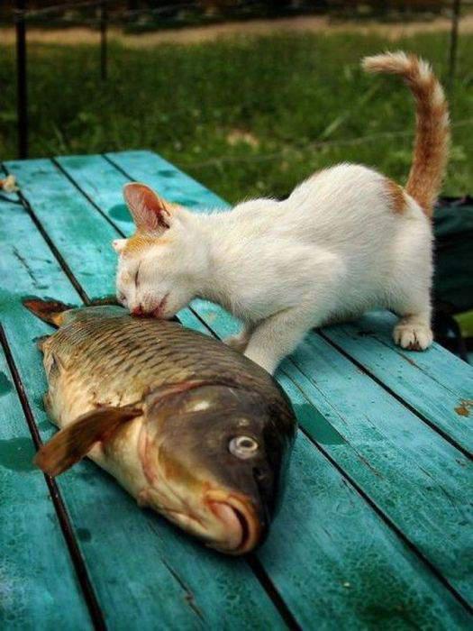 Животные: Миммишность