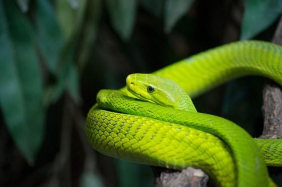 Животные: Самые красивые змеи