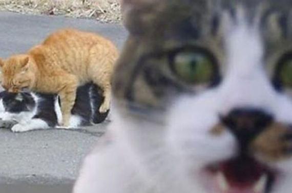 Животные: Испортили фотографии