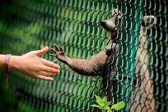 Животные: Енот