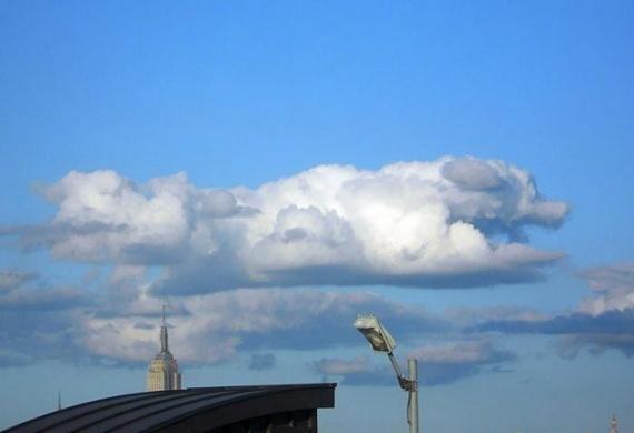 Природа: Белокрылые лошадки:-)