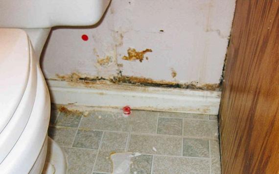 Жизнь: Домашняя грязюка