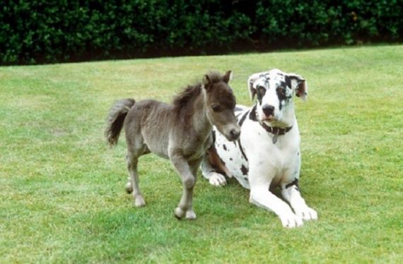 Животные: Лошадки:-)